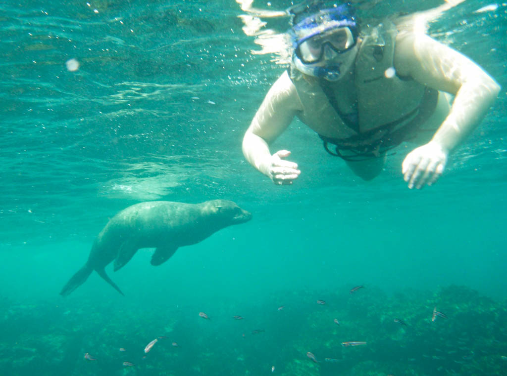 Shari snorkelling with a sea lion and a few fish swimming nearby