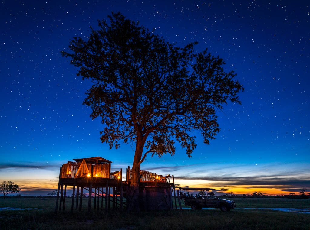 Large tree and starry night at dusk with treehouse prepared for a sleepout in Zimbabwe