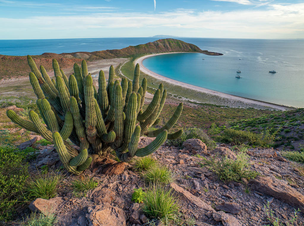 Cactus on a hill with a view of the ocean on Isla San Francisco