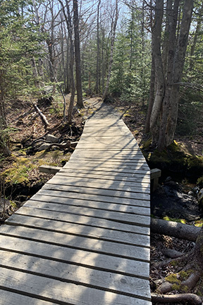 Wooden slat boardwalk on a mountain bike trail through the woods on a sunny day