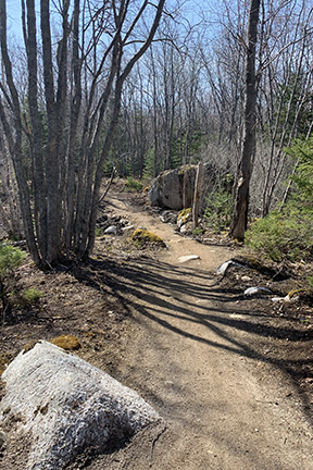 Dirt track and boulders on a mountain bike trail through the woods on a sunny day