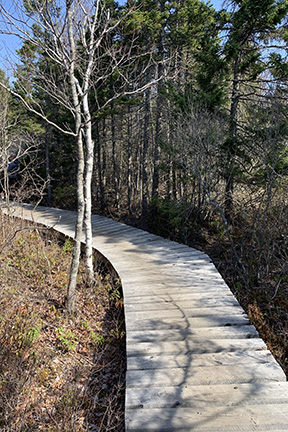 Boardwalk through a forest area on a mountain bike trail on a sunny day